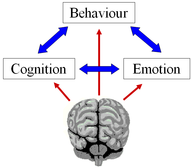 cognition and emotion essay Course notes and writing tips millions of students use studymode to jumpstart their assignments 25 04 2014 oxytocin cognition and emotion essay is central to.